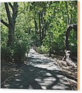 Shaded Paths In Central Park Wood Print