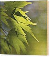 Shades Of Green And Gold. Wood Print