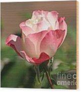 Shades Of Pink Wood Print