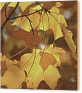 Shadow Dancing Leaves Wood Print