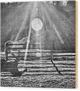 Shadow Wood Print by Darrin Doss