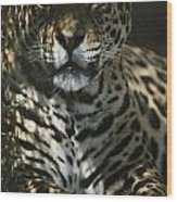 Shadows Flicker Over A Jaguar Panthera Wood Print by Hope Ryden