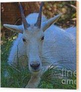Shady Goat Wood Print