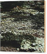 Shady Moss Wood Print