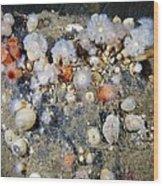Shaggy Mouse Nudibranchs Wood Print