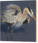 Shaking Out My Tail Feathers Wood Print