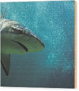 Shark Attack Wood Print