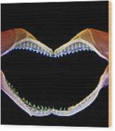Shark Jaws Wood Print