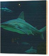 Shark Wood Print