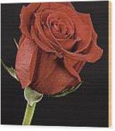 Sharp Red Rose On Black Wood Print by M K  Miller