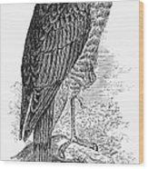 Sharp-shinned Hawk Wood Print