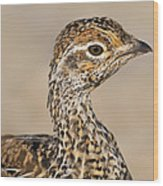Sharp-tailed Grouse Wood Print