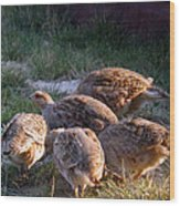 Sharptail Grouse Wood Print