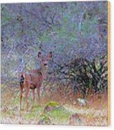 Shasta County Deer  Wood Print