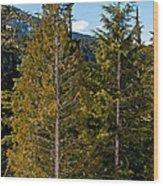 Sheared Trees Wood Print