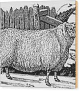Sheep, 1788 Wood Print