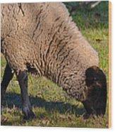 Sheep 3 Wood Print