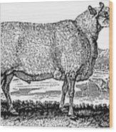 Sheep, C1800 Wood Print