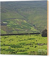Sheep Graze In A Pasture In Swaledale Wood Print