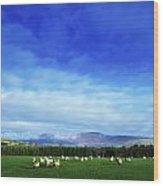 Sheep Grazing In Field County Wicklow Wood Print