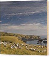 Sheep Grazing In Headland Wood Print