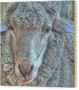 Sheep Wood Print by Imagevixen Photography