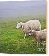 Sheep In Misty Meadow Wood Print