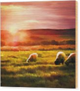Sheep In Sunset Wood Print by Suni Roveto