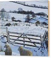 Sheep, Ireland Sheep And A Farm During Wood Print