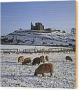Sheep On A Snow Covered Landscape In Wood Print