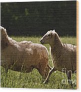 Sheep On The Move Wood Print