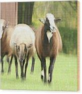 Sheep On The Run Wood Print