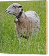 Sheep With A Bell Wood Print