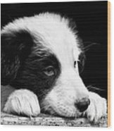 Sheepdog Puppy Looking Out Wood Print by Rory Trappe