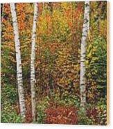 Shelburne Birches 2 Wood Print