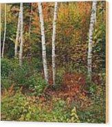 Shelburne Birches Wood Print