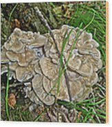 Shelf Fungus - Grifola Frondosa Wood Print