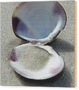 Shell And Sand Wood Print by Sheri McLeroy