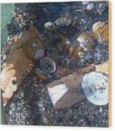Shell Beach Wood Print