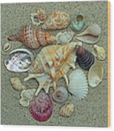 Shell Collection 2 Wood Print