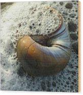 Shell In Sea Foam Wood Print