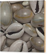 Shell Sigay 1 Wood Print