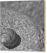 Shells IIi Wood Print by David Rucker