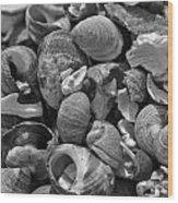 Shells V Wood Print