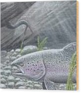 Shelter- Rainbow Trout Wood Print