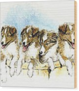 Sheltie Pups Wood Print