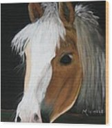 Shetland Pony Wood Print