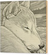 Shiba Inu Wood Print