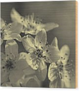 Shimmering Callery Pear Blossoms Wood Print