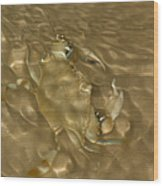 Shimmering Crab Wood Print